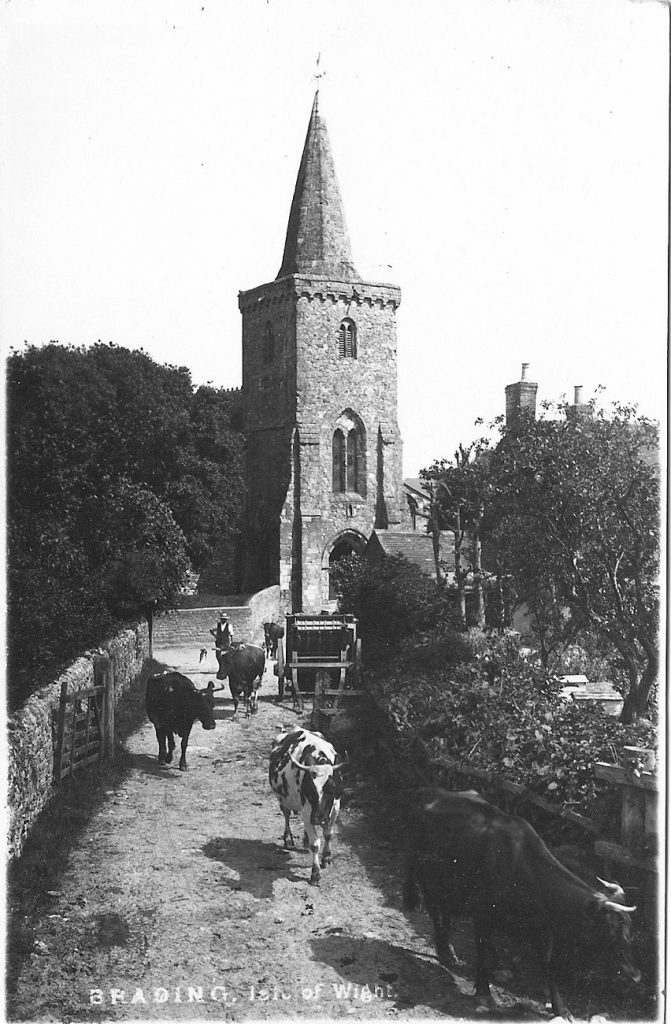 St Mary's 1910 with cows