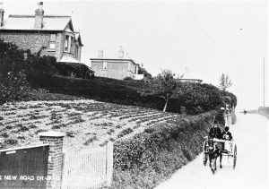 Brading. New Road. Dr. Chick Lucas driving his cart past Alma Cottage. Postcard.