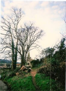 Photo of felled trees by the Pound, after the gale, January 1988